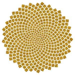 Sonnenblumen - Samen - Fibonacci-Spirale - Goldener Schnitt